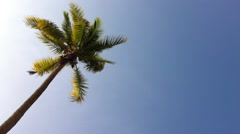 Coconut Tree Under Blue Sky And Morning Sun, loop - stock footage