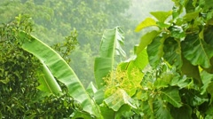 rainy season in tropical climate - stock footage