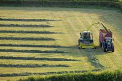 tractors cutting silage and filling trailer in field - stock photo