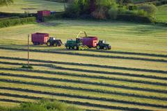 Tractors cutting silage and filling trailer in field Stock Photos