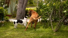 Best Dog Friends Playing Outdoors in the Garden. Stock Footage