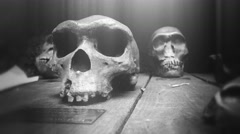 4k Memento Mori, human skulls and monkey skulls bw fx-version Stock Footage