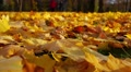 Autumn day in park, fallen leaves, strolling people. Selective focus. Footage