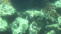 fish swarm croatia 05 - stock footage