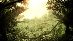 Rain Forest Stock Footage