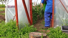 Farmer man spray tomato plants with chemical Stock Footage