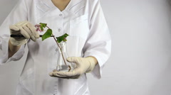 Scientist woman with pincette put buckwheat plant into flask Stock Footage