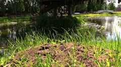 Anthill covered with grass beside rippling stream on suuny day Stock Footage