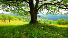 Lonely tree on a background of mountain scenery Stock Footage