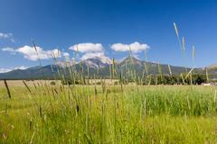 Farmyard and grasses by mt princeton co Stock Photos