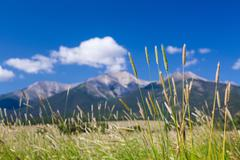 Farmyard and grasses by mt princeton co Kuvituskuvat