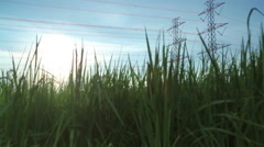 Electric pole, High voltage towers and sky in rice green filed dolly shot Stock Footage