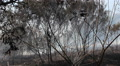 Slash And Burn Forest Footage