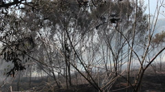 Slash And Burn Forest Stock Footage