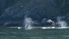 Orca, Killer Whale, Whales, Pod, 4K, UHD Stock Footage