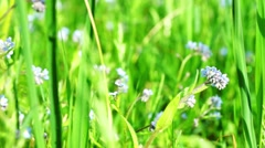 Beautiful blue flowers at field Stock Footage