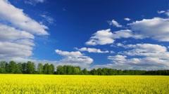 Summer nature landscape. Time-lapse. - stock footage
