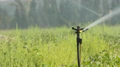 Israeli  Agriculture Stock Footage