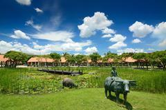 Asiatic water buffalo Stock Photos