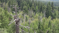 Dead trees. Co2 and So2 emission. Acid rains. Ecological disaster Stock Footage