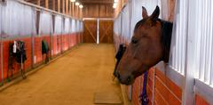 Horse sticks his head out stables paddock Stock Photos