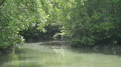The canal in mangrove forest Stock Footage