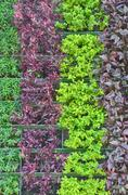 Ornamental plants Stock Photos