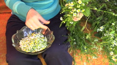 Hand reap little medicinal chamomile flowers in glass dish Stock Footage