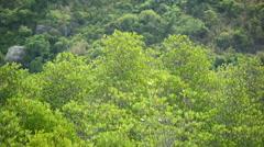 Mangrove forest at Prachuap Khiri Khan province , Thailand. Stock Footage