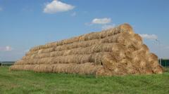 Mow hayloft wheat harvest on the farm Stock Footage