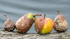 Rotten apple and pear - stock footage