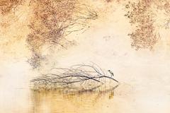 zen morning - stock illustration