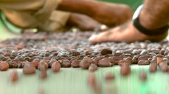 Agriculture Hands sorting jojoba nuts on the conveyor belt Stock Footage
