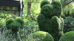 Topiary  of the garden Stock Footage