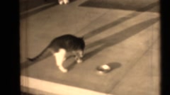 16 mm film cat and town street Stock Footage