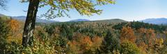 Fall color in White Mountains, New Hampshire, USA Kuvituskuvat
