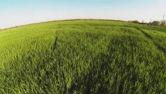 Aerial of green wheat from low to high Stock Footage