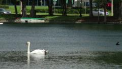 Swans in Lake Eola Park Stock Footage