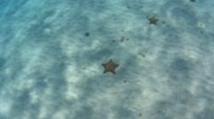 Starfish on sandy ocean floor - stock footage