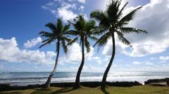 Beach, kaaawa, windward, oahu, hawaii Stock Footage