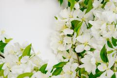 beautiful designer background with the sprigs of flowering apple-tree - stock photo
