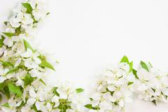 Beautiful designer background with the sprigs of flowering apple-tree Stock Photos