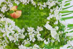 Beautiful designer background with the sprigs of flowering apple-tree and red Stock Photos