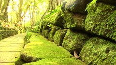 Moss on the rock in the Forest Stock Footage