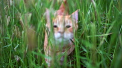 Cat looking through weeds chasing towards camera - stock footage