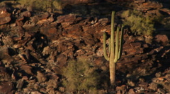High angle view of cactus in desert Stock Footage