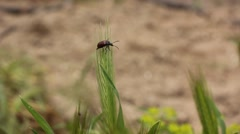 Little bug on grass Stock Footage