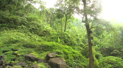 Tropical Trees in the Jungle in Bali Indonesia Stock Footage