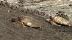 Sea Turtles coming to the beach in Hawaii - stock footage