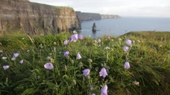 Video of Cliffs Of Moher during sunset with flowers Stock Footage